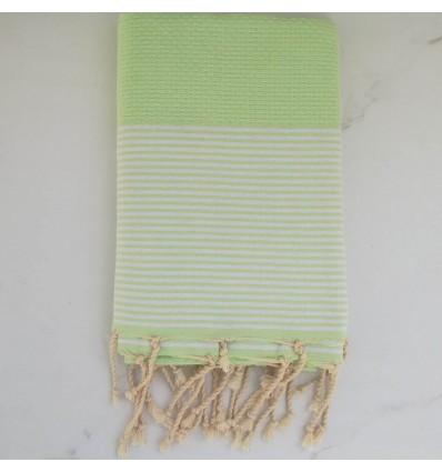 honeycomb Green Lizard